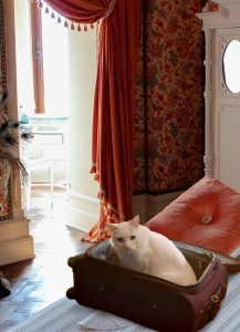 White Cat in Suitcase Urging you to Sign up for Newsletter